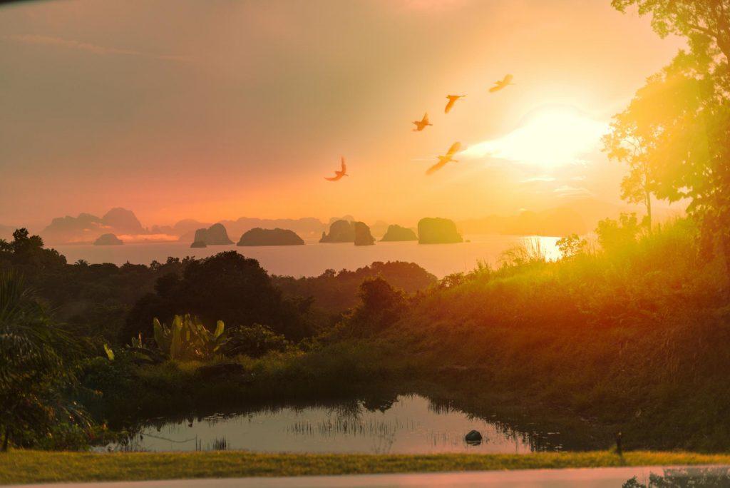 9 hornbills ko yao yai thailand sunrise