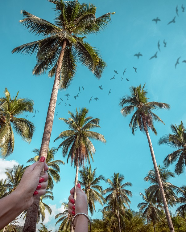 birds and palms